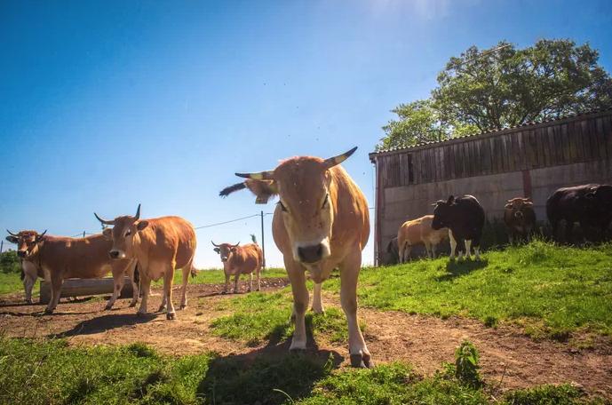 """Les nombreux défis de la """"Ferme qui Bouge"""" pour une agriculture biologique"""