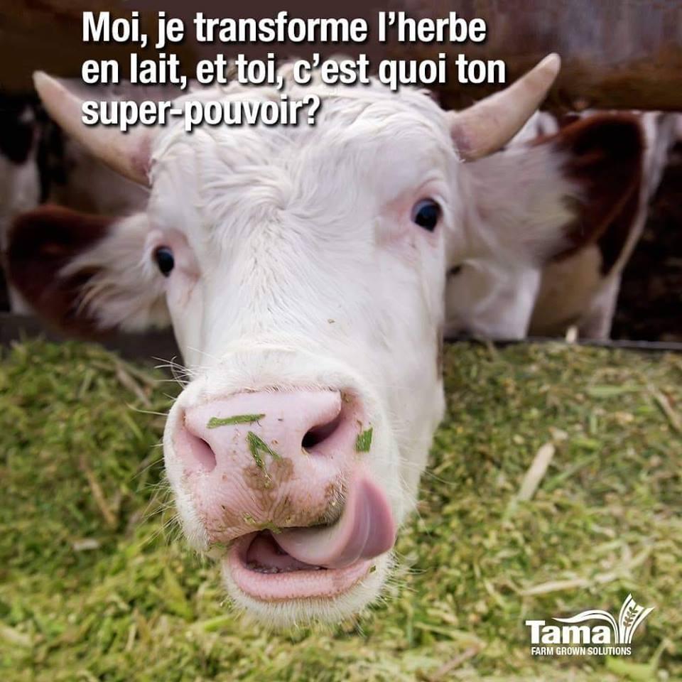 Moi, je transforme l'herbe en lait, et toi, c'est quoi ton super-pouvoir ?